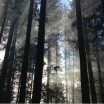 Making Sense of the Forest and the Trees